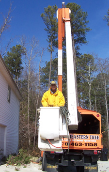 Tree Removal, Palmetto